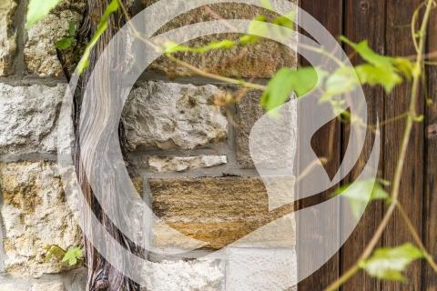 Weinreben an einer Hausfassade in Nierstein