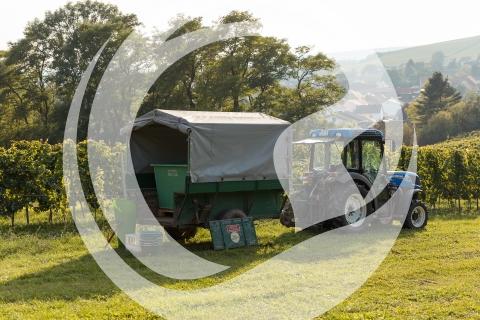 Traktor mit Anhänger für Weinlese