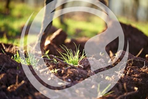 Boden im Frühjahr