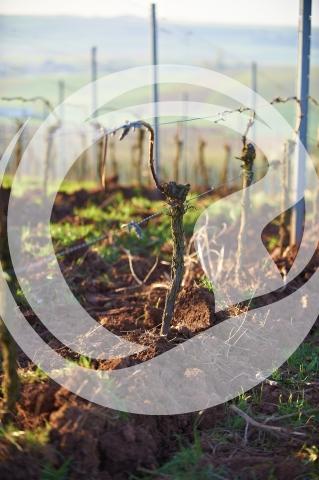 Frisch gepflügter Weinbergsboden