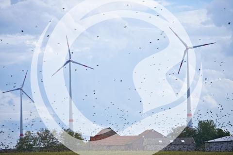 Vogelschwarm bei Dorn-Dürkheim