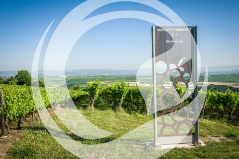 Schönste Weinsicht 2016