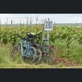 Fahrräder in den Weinbergen
