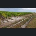 Unwetterschäden in den Weinbergen