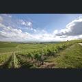 Schönste Weinsicht 2020 Zornheimer Ruhkreuz