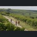 Radtour entlang der Rheinterrasse