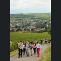 Sommelier Tour an der Rheinterrasse
