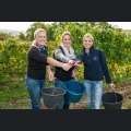 Weinmajestäten 2013/2014