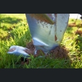 Bodenbearbeitung im Frühjahr