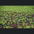 Junge Gruenpflanzen