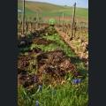 Bodenduengung mit Kompost