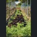 Bodendüngung mit Kompost