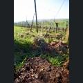 Weinbergsboden mit Kompost