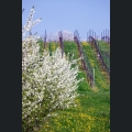 Blühende Frühlingslandschaft