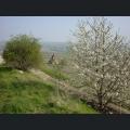 Kreuzkapelle im Frühjahr
